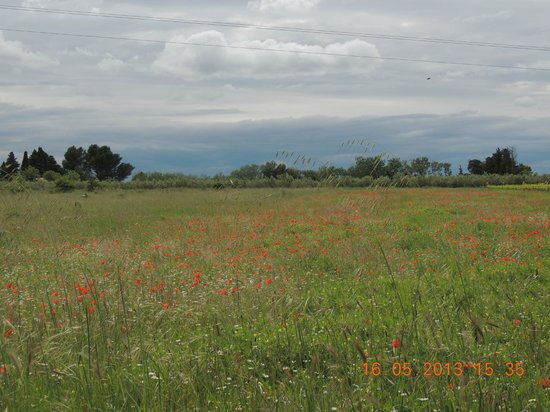 Moulin de la Roque: local poppie fields
