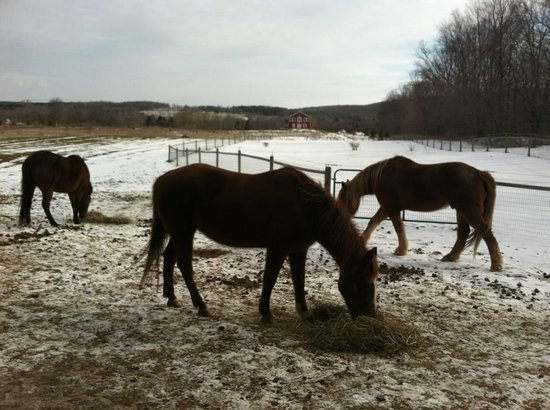 Mountain Horse Farm Bed and Breakfast and Spa: Horses at Mountain Horse Farm!