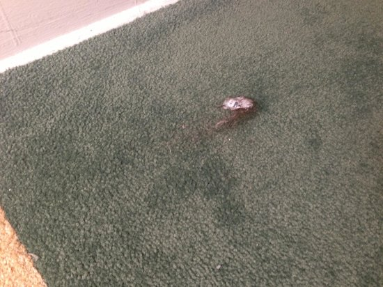 Harrison Hotel: Balls of hair in the hallway! CLEANING STAFF STINKS!