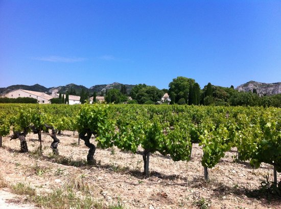 Les Baux de Provence, France : The vineyard!