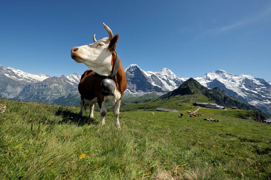 Bernese Oberland, Switzerland: Maennlichen