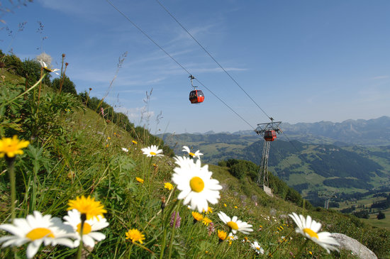 Bernese Oberland, Switzerland: Rinderberg