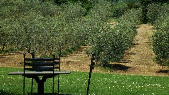 Villa Campestri Olive Oil Resort : Parc devant l'hôtel