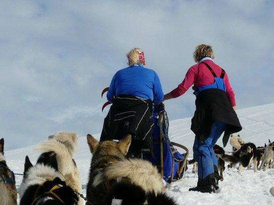 Svalbard Husky: hu hej af og skubbe også