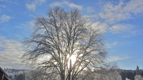 Ostergotland County, Sweden: sunlight through a tree