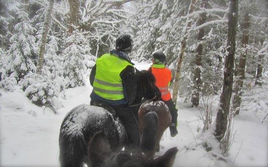 Ostergotland County, Švédsko: Riding into the woods