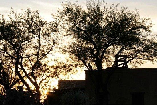 Old Tucson : Trees