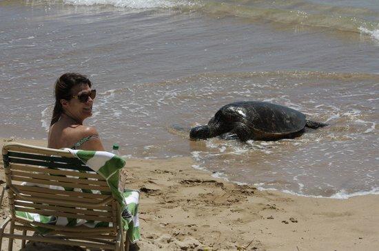 Nohonani Condos : Green Sea Turtle Visits to Sun