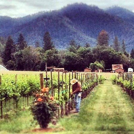 Foto de Wonders of Wine
