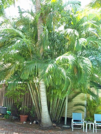 Angelina Guest House: Alot of palm trees