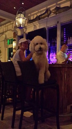 Sunset Key Cottages: Only in Key West, a dog enjoy the Sunset Key bar