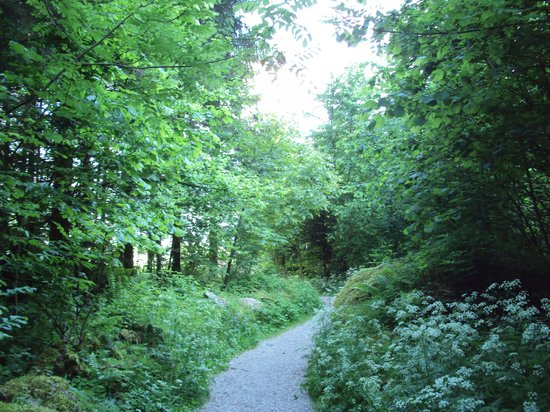 Walking Trails: Walks in the Forests