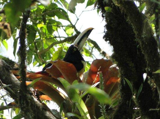 MindoXtrem Birds: AVES