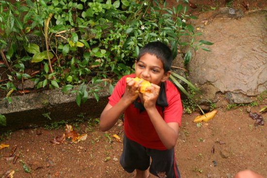 Rose Gardens Homestay: Deepu shows me how to eat a mango
