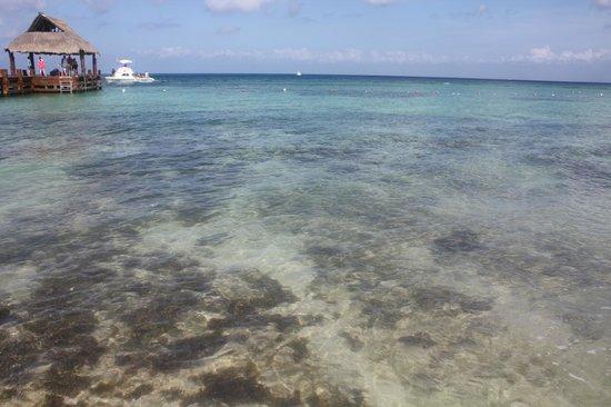 Secrets Aura Cozumel: Ocean