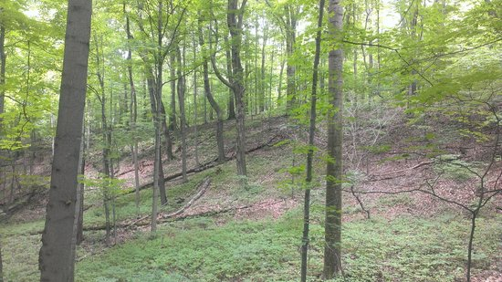Bushy Run Battlefield: Pontiac's warriors hid in the woods like these