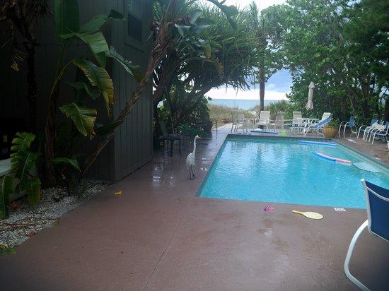 Gulfside Resorts: views