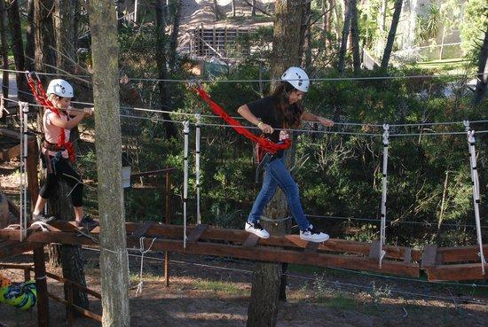 Bosque Aereo Carilo