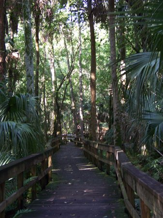 Highlands Hammock State Park: one of the many trails