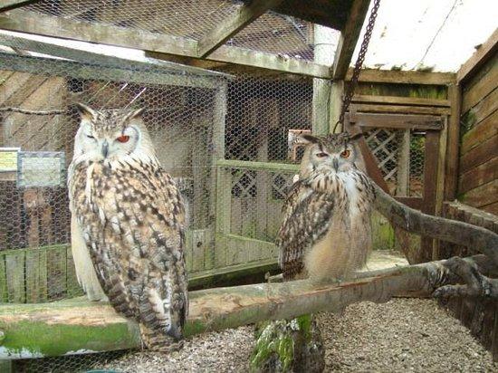 Small Breeds Farm Park and Owl Centre: Owls
