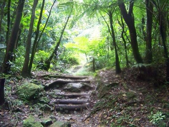 Chez Ophelia Cottage Apartments : Forêt tropicale vers chez Ophélia