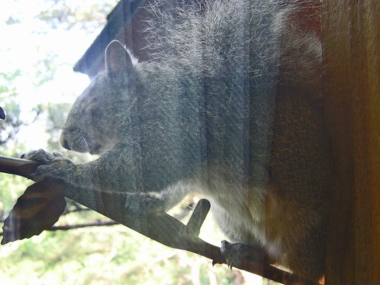 Treehouse Cottages: Directly on Opposite Side of Glass from Squirrel - Very Close