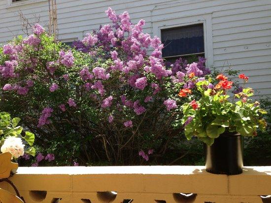 Hilton Garden Inn Laramie: Lilacs