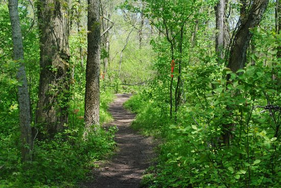 Point Pelee National Park: Seasonal footpath, great place for warblers