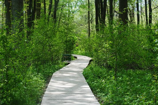 Point Pelee National Park: Boardwalk on Tilden Woods Trail