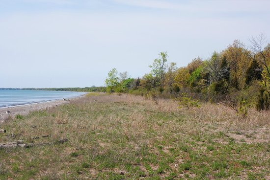Point Pelee National Park: Black Willow Beach
