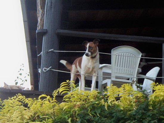 Coconut Grove Beachfront Cottages: Millie greeting her guests from the dining porch