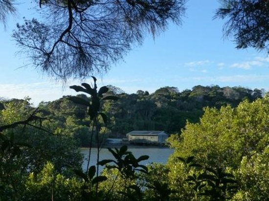 Aroha Island Ecocentre: View from Aroha Island Discovery Trail