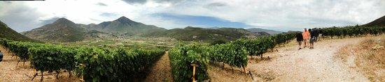 Domaine Skouras Winery: Vineyards!
