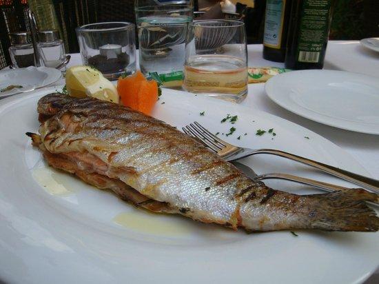 Ristorante al Gondoliere: Grilled trout in Ristorante Al  Gondoliere