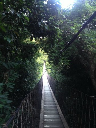 Earthly Paradise Bird Nest Resort: hanging bridge