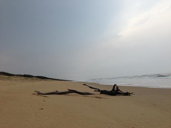 Puri Beach: Beleshwar beach, 15 Kms from Puri, is one hell of a beach! Otherworldly!