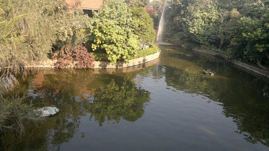 ITC Mughal, Agra : Small pond