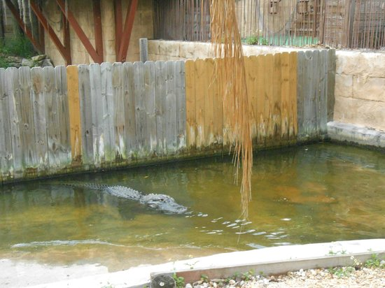 Little Beauty Picture Of Gator Golf And Adventure Park