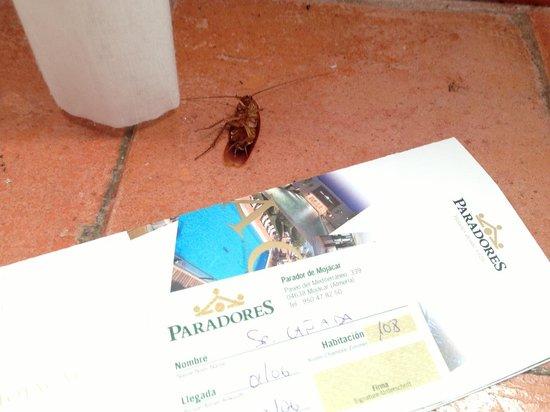 Parador de Mojacar : La cucaracha que pude matar