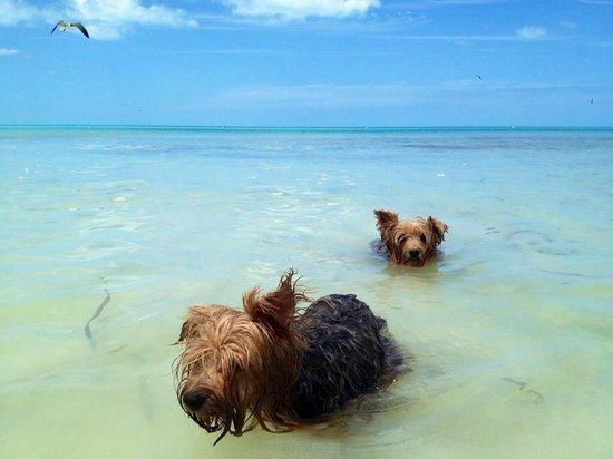 Holbox Hotel Mawimbi: owner's doggies enjoying the beach