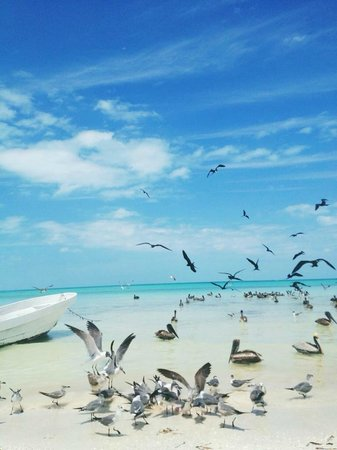 Holbox Hotel Mawimbi: typical beach scenery