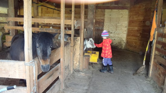 Bauernhof Vitalhof Tunelhof: small barn, just right for kids