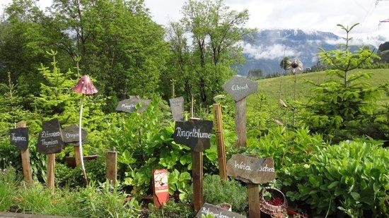 Bauernhof Vitalhof Tunelhof: fresh herbs