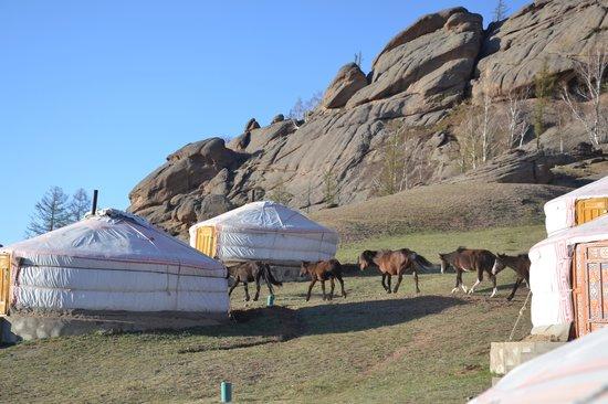 Tiara Resort: Horses between the gers