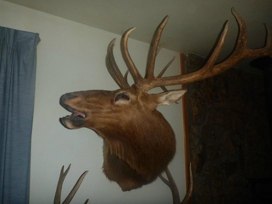 Antler Inn: ohh thats a big one