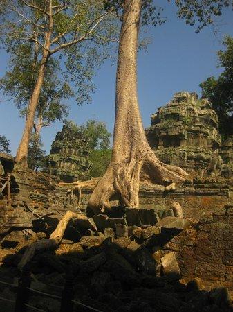 Bopha Angkor Hotel & Restaurant : Umgebung