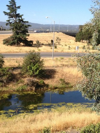 Hampton Inn Morgan Hill: View out my window. Mother duck with babies in the stream.