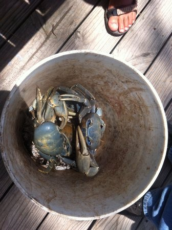 Daniel's Cafe by the Sea: Blue crabs