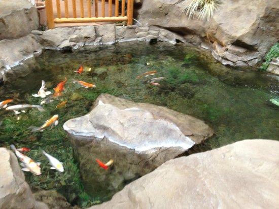 C'mon Inn Hotel & Suites : Koi pond inside hotel