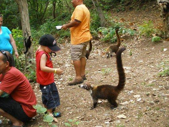 abd28034c5784 ... mono cara blanco. Syltravel Day Tours  visita a los monos